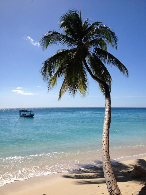 Westküste-Palme