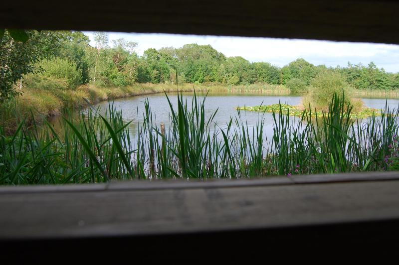 This is the view from the hide, where—if you're lucky—you might observe a busy kingfisher.