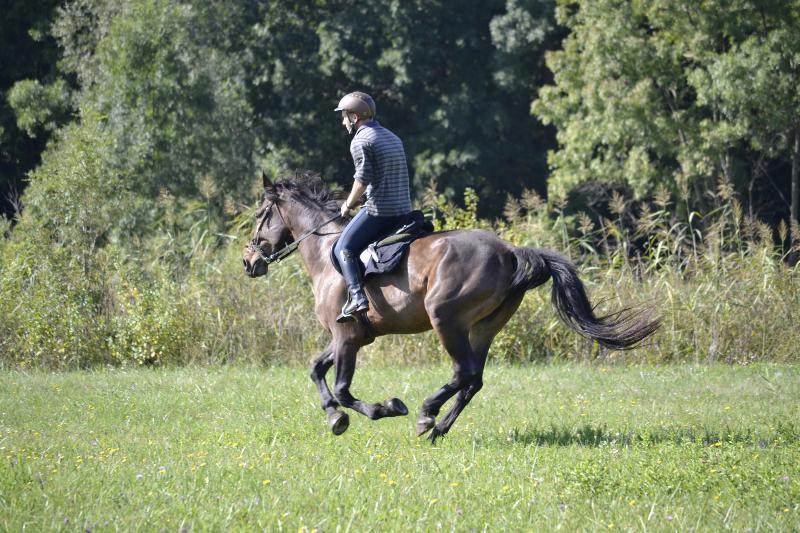 Szerval Horse Riding Holidays – semesterbostad i Rackeve