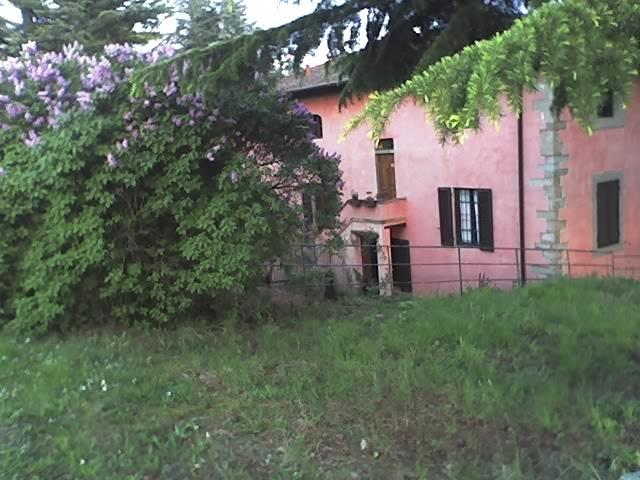 LILAC IN SPRING AT VILLA ROSA