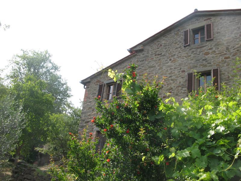 Splendid farmhouse among olive groves and vineyard, location de vacances à Col di Morro
