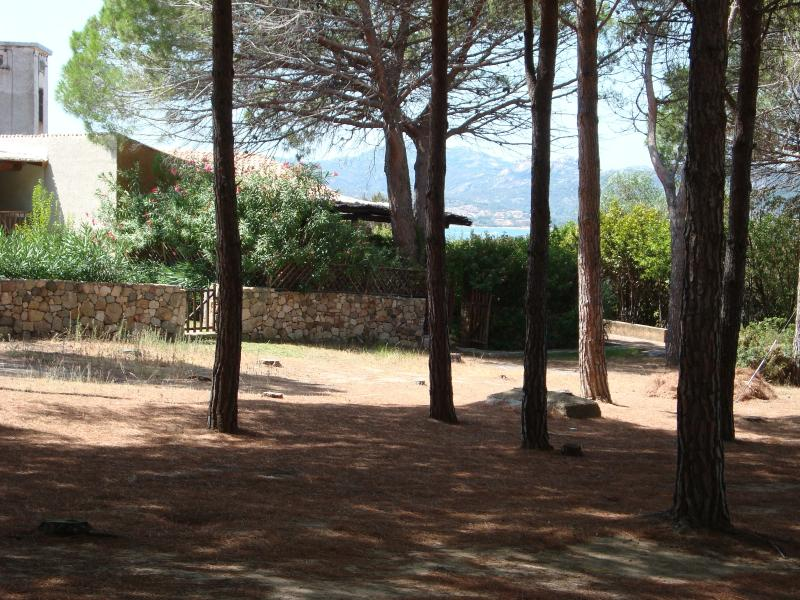 External view of pine trees