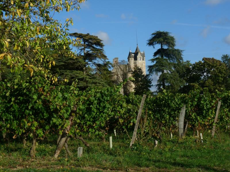 Le délicat château de Coulaine au cœur du vignoble de Chinon au-dessus de votre résidence