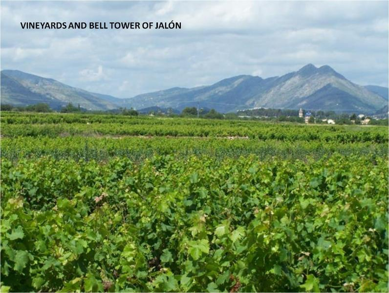 Environment: vineyards and Jalón bell tower in the background.