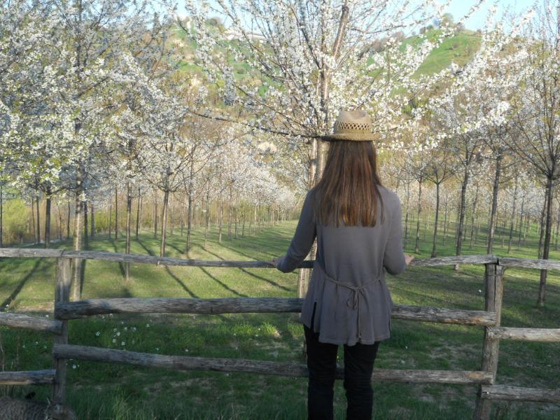 Fioritura dei ciliegi alla Scentella (marzo-aprile)