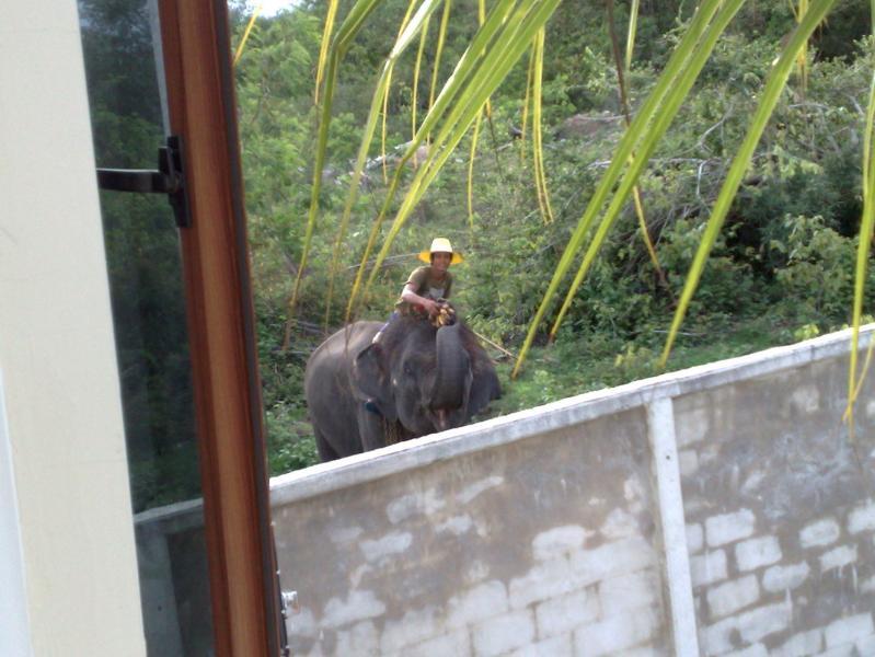 elephant behind the house