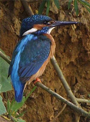Abundant wildlife, including water voles, moor hens