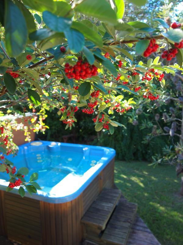 Spa/jacuzzi/hot-tub in backyard