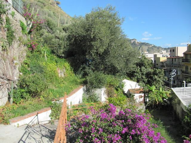 The main stair leading to the house surrounded by our garden