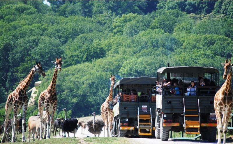 Zoo de port Lympne