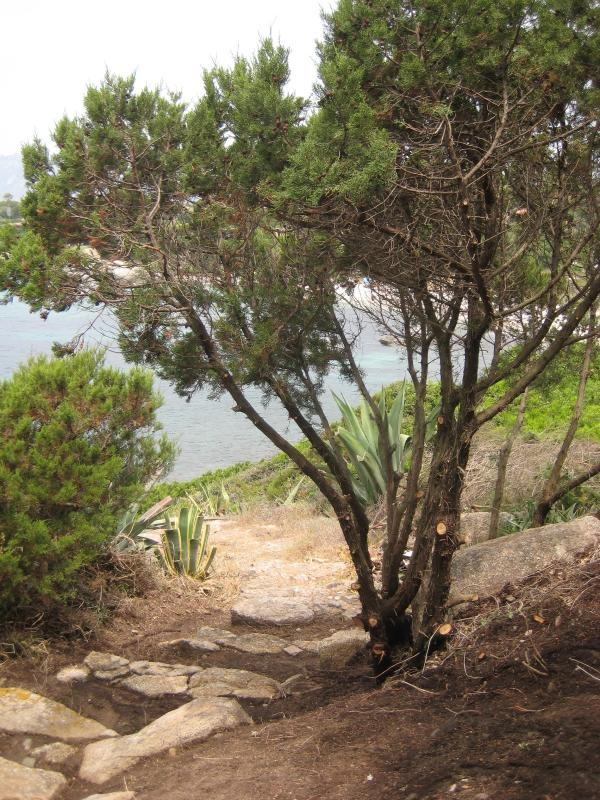 Scale private (40 gradini circa) che scendono negli scogli sottostanti