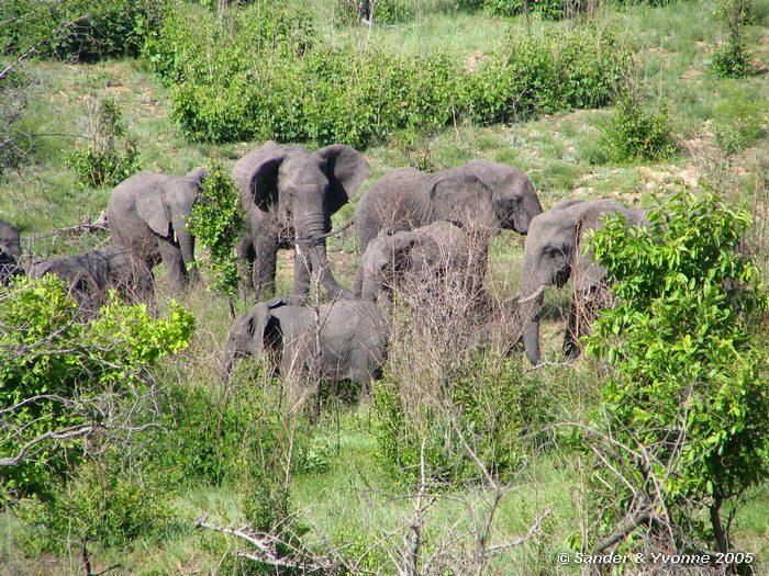 Elefanti al parco kruger