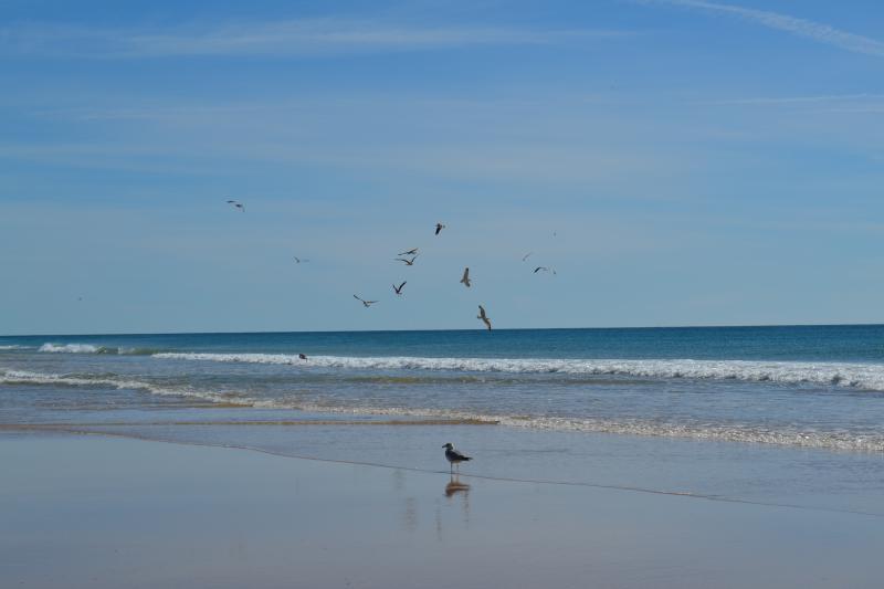 Praia de areia de Alvor