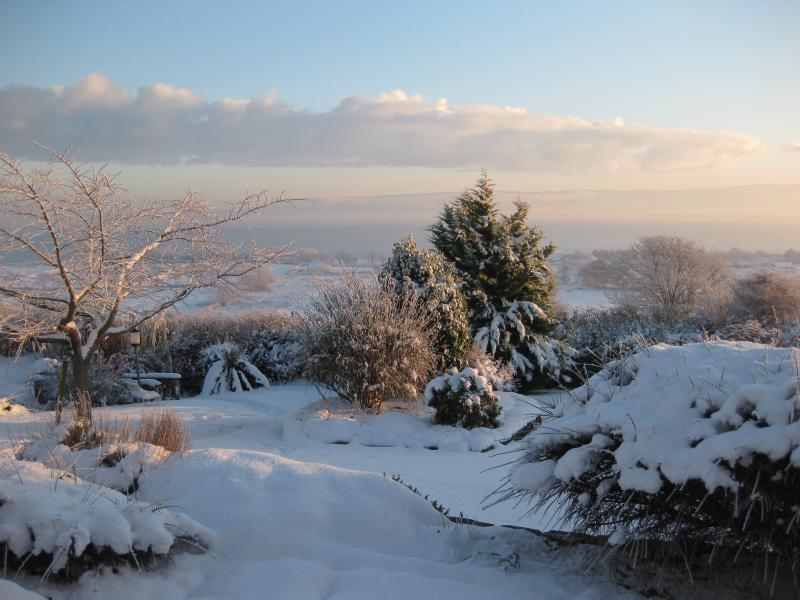 Winter garden (Lough Foyle)