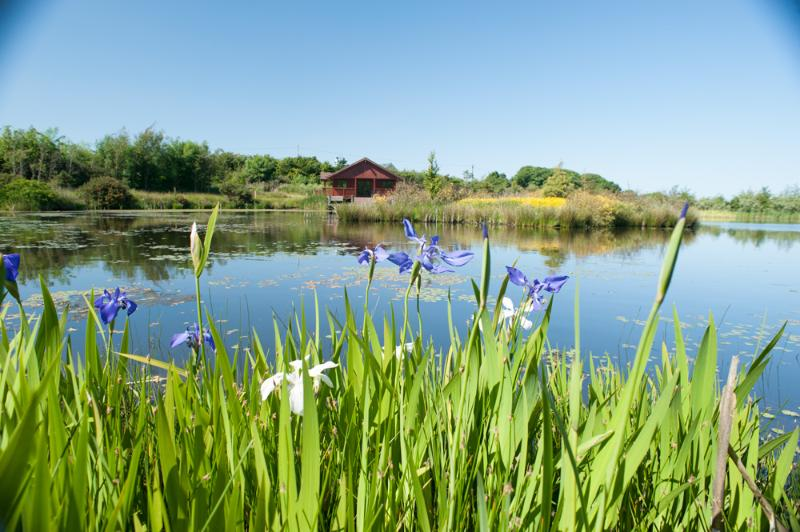 lakeside mixed Iris and water lilies