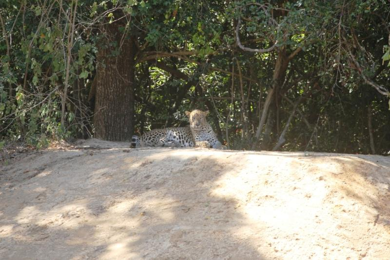 A day trip to the famous willpattu national park the habitat to leopard, bear and birds and mamals