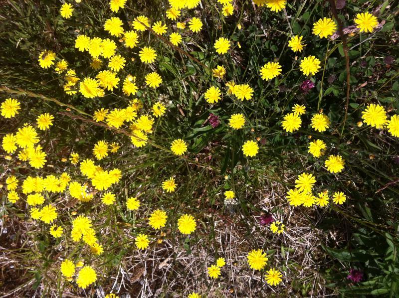 Summer flowers on the mach air