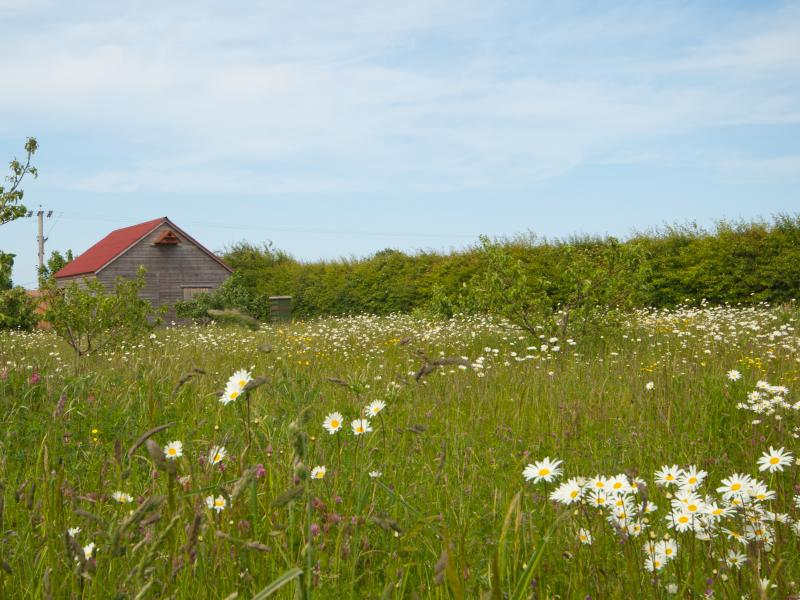 Rookery Barn Holidays Wild Flower Meadow where we keep the bees.