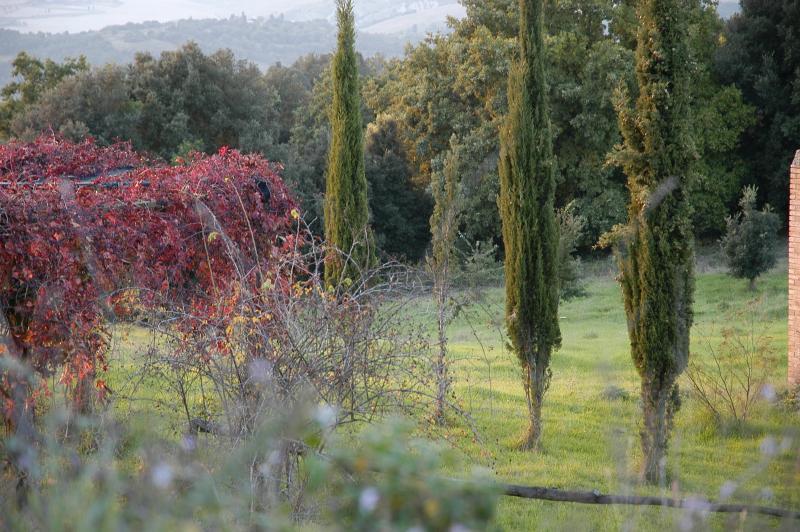 Part of the garden In the clear, still warm autumn sunlight