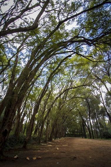 Jacaranda Covered Driveway