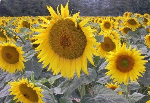 Over 300 days of sunshine per year