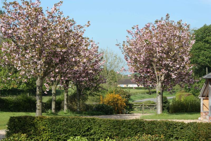 Cherry trees in early Spring bloom
