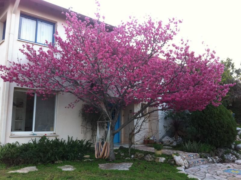 In the heart of the galilee, vacation rental in Mi'ilya