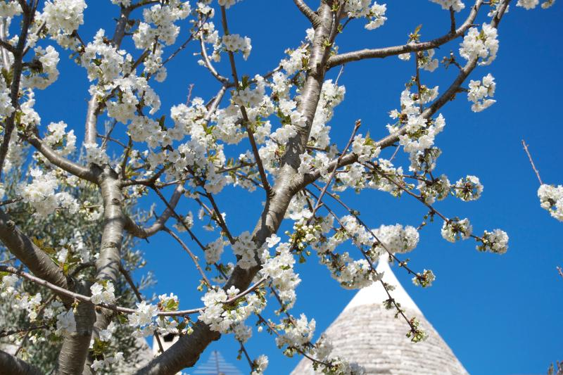 Our trulli in springtime