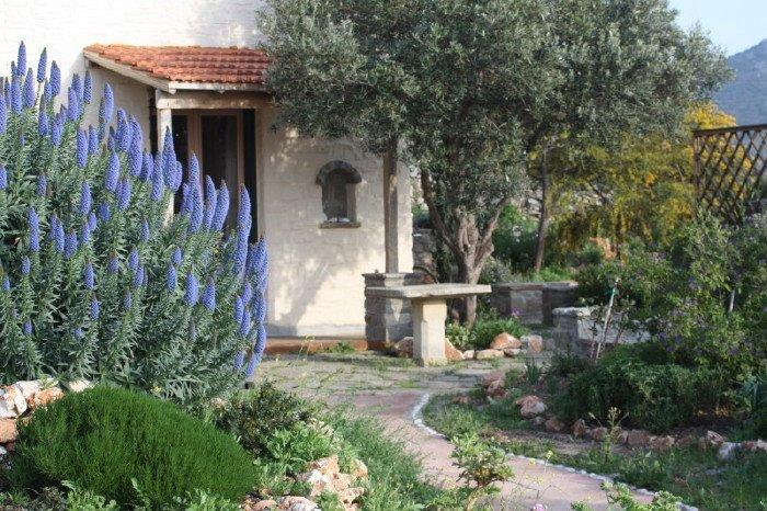 The Olive's House and the echium bush blooming a striking blue in March