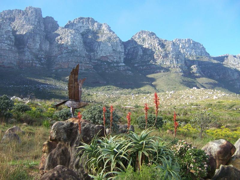 Back Garden under the Twelve Apostles