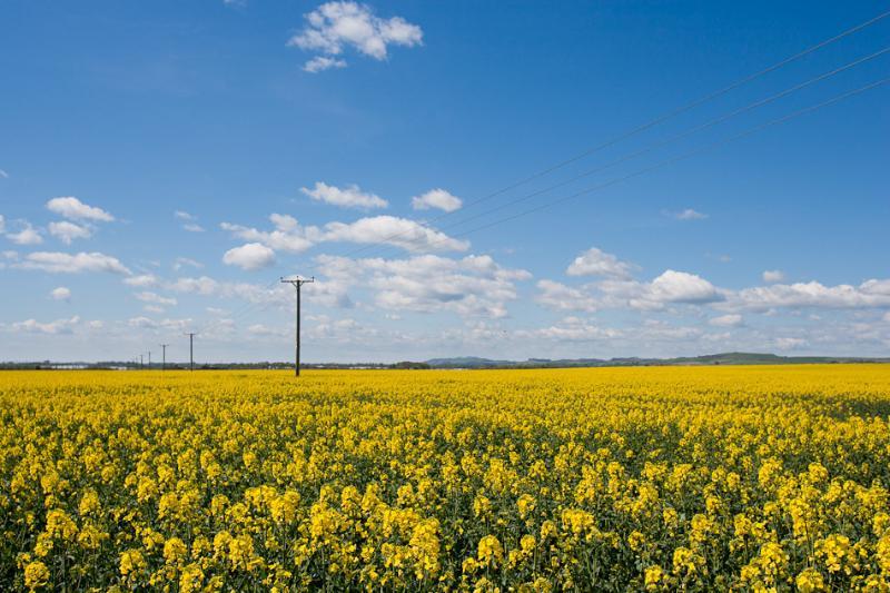 Fields outside Crail.