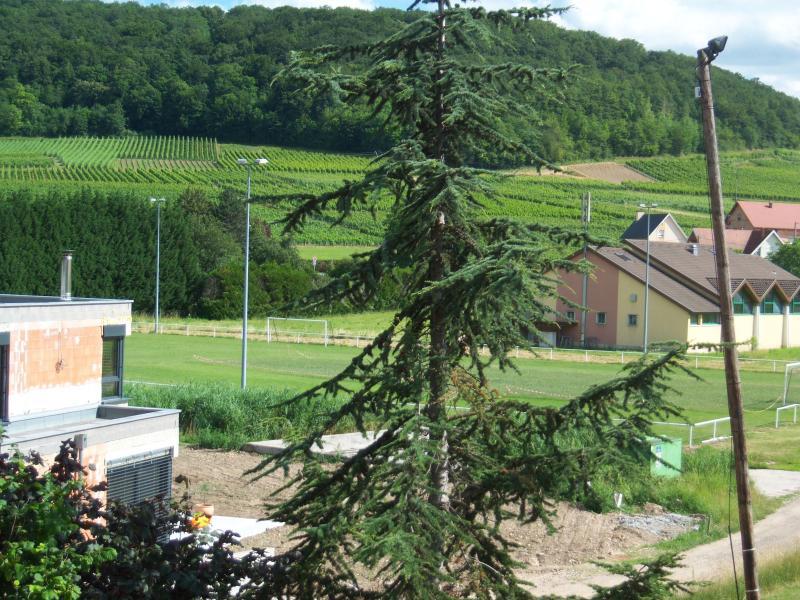Le Bollenberg , une des trois collines environantes