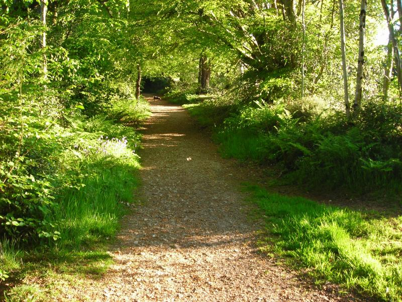 Near forest walks in Area of Oustanding Natural Beauty minutes away