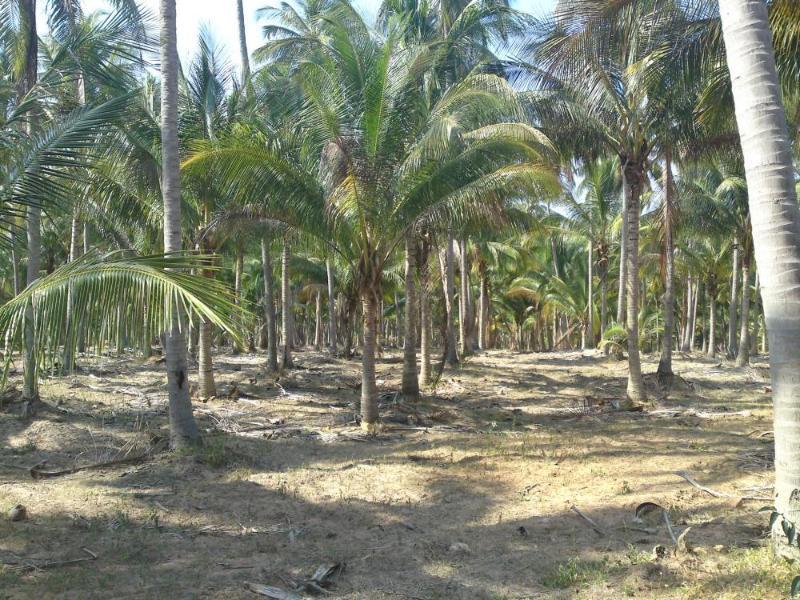 Plantages