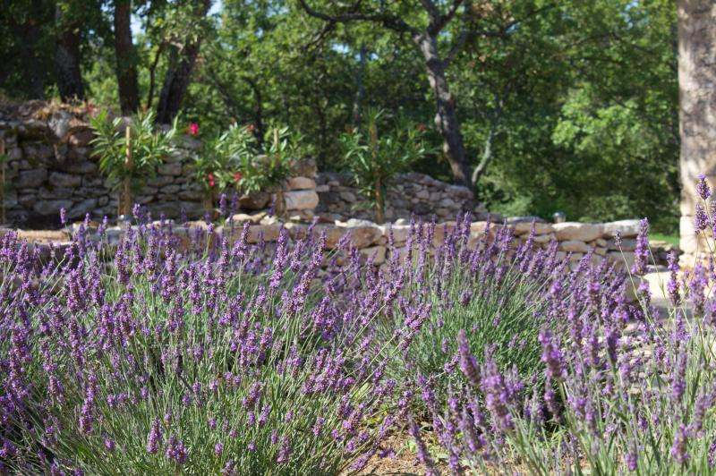 Lavender in the parc