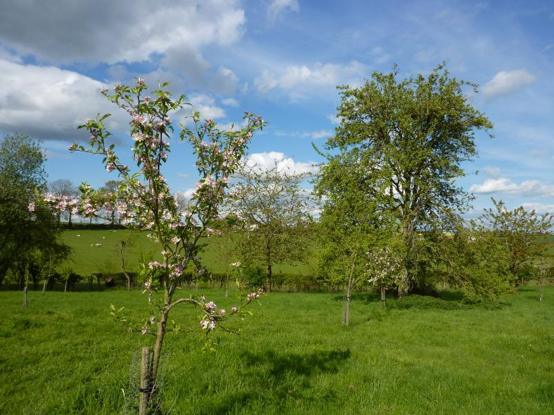 View of the orchard from the balcony