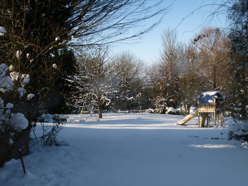 The garden in the snow