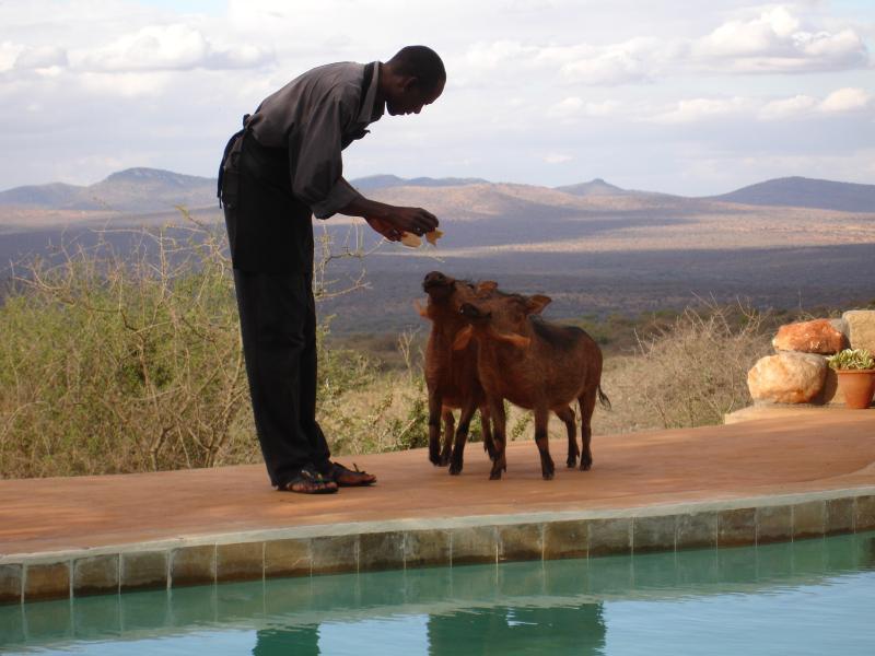 Tandala, Maparasha Hills, Il'Bisil, Amboseli District, alquiler de vacaciones en Provincia del valle del Rift