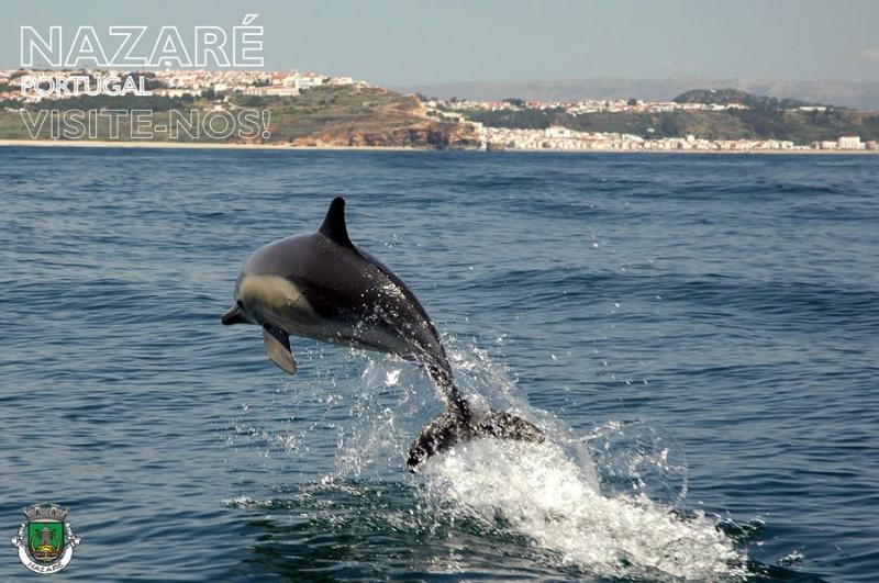 Dolphin in Nazare Beach