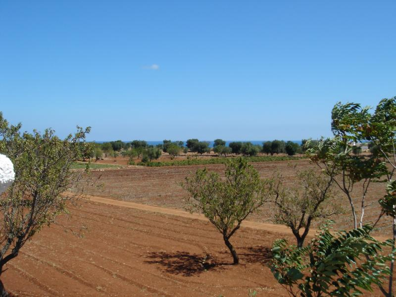 View over the olive trees