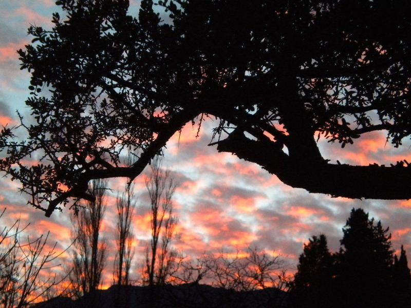 arbol de domus contra las nubes