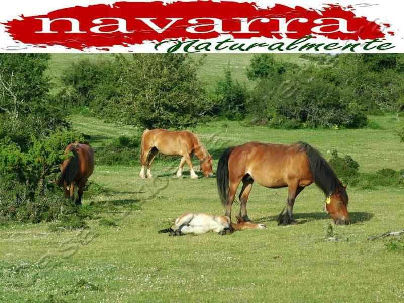 Casa Rural en Navarra Spain Para  Familias con Niños y Mascotas en la Naturaleza, vacation rental in Navarra