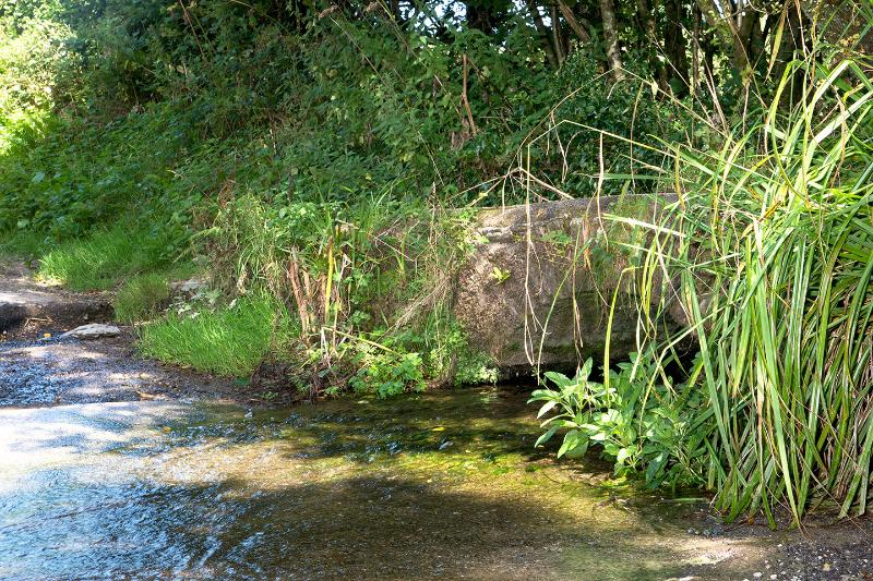 One of our ponds which provide for the wildlife.