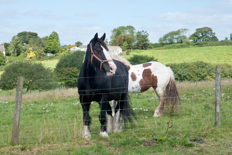 A couple of the horses on the farm.