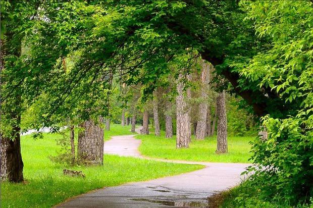 Green park Vingis in 10 min walk distance