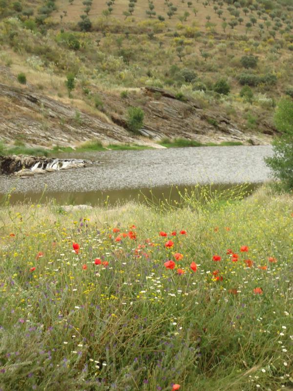 Sabor river
