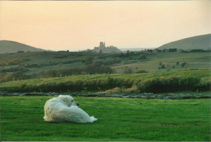 Beautiful views of Corfe Castle from all over property
