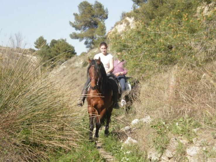 Excursions to the interesting places in the charming landscape on andalusian horses.