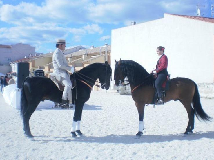 Riding lessons for every level/ 'Doma-Vaquera' lessons (the spanish way to ride horses).