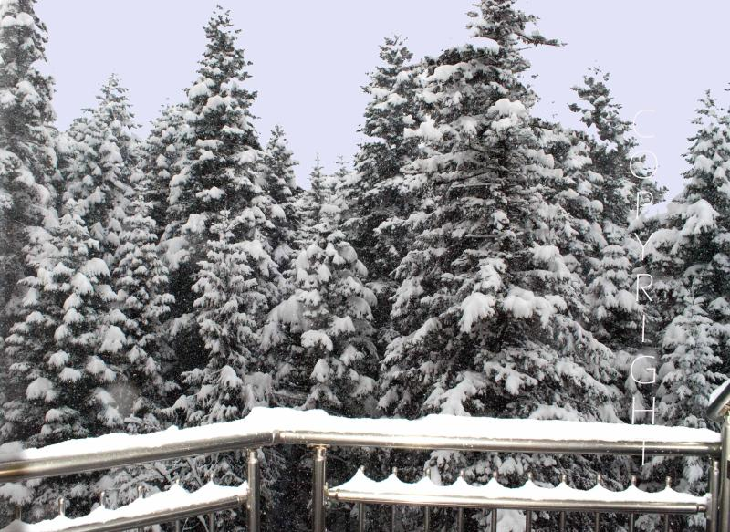 View of pine trees from one of the balconies